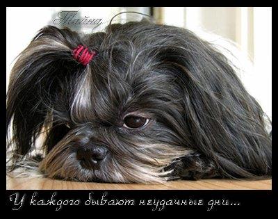 Не грусти - Фото с интересными и прикольными животными
