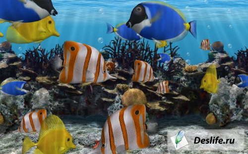 3D Fish School Screensaver v 3.9
