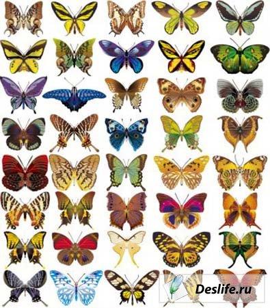 Бабочки - клипарт