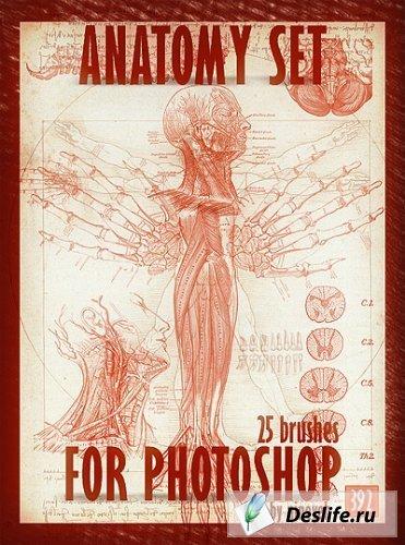 Набор кистей - Anatomy (Анатомия)