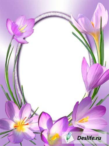 Крокусы - Цветочная рамка