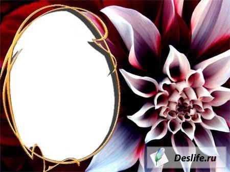 Рамка для фотошопа - Цветочный взрыв