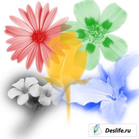 Кисти в виде цветов