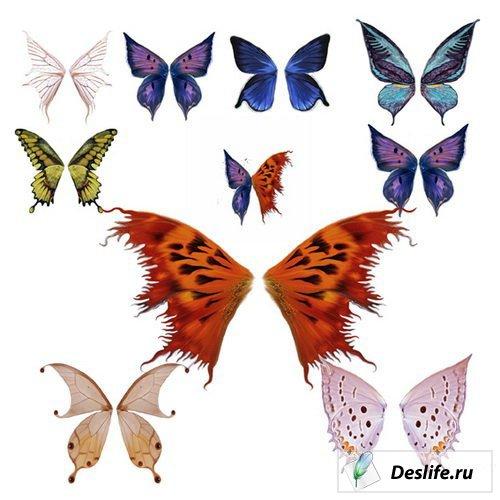 КлипАрт Крылья бабочек