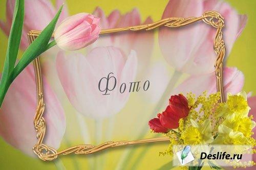 Весенние тюльпаны - Рамка для фотошоп