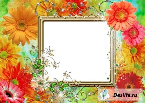 Цветущие герберы - Рамка для фото