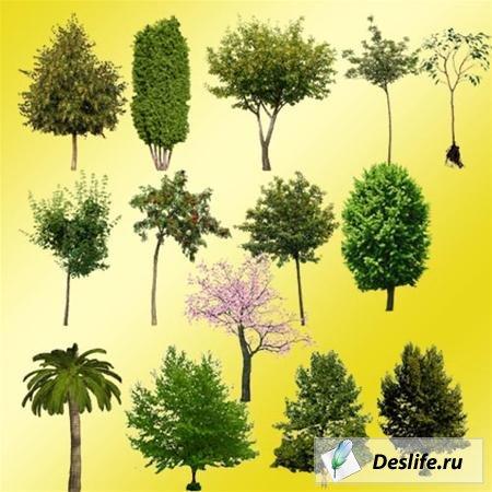 Клипарт - Деревья
