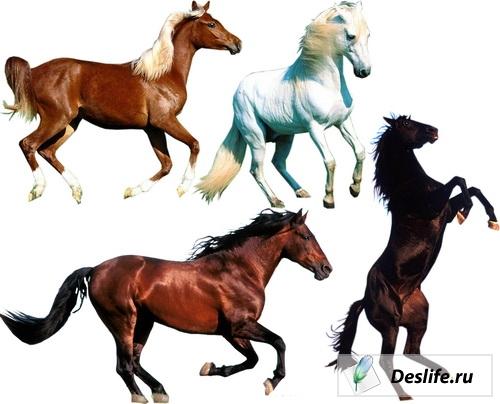 Лошади - Клипарт в растре