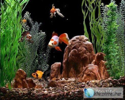 Goldfish Aquarium 2