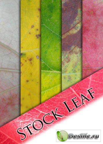 Качественные лиственные текстуры