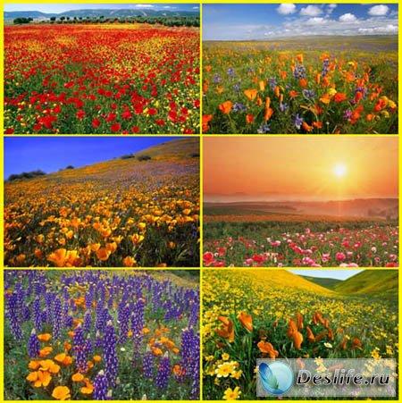 Цветочные пейзажи - Красочные Обои