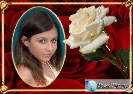 Белая роза - Рамка для фотошопа