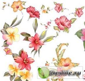 Цветочный клипарт - Gibiskys