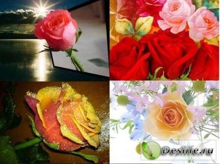 Красивые обои - Розы