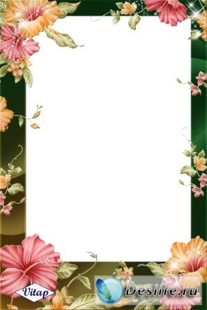 Цветки суданской розы - Рамка для фотошопа
