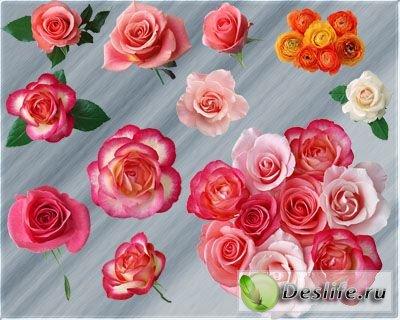 Клипарт - Розы