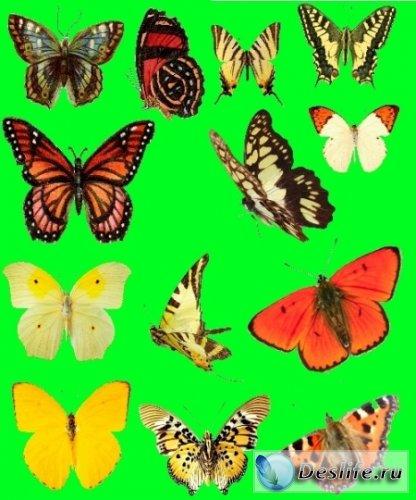 Бабочки - Растровый клипарт