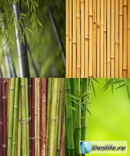 Бамбук - Фоны