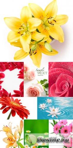 Цветы - подборка фотографий - Клипарт