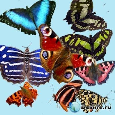 Клипарт – Бабочки