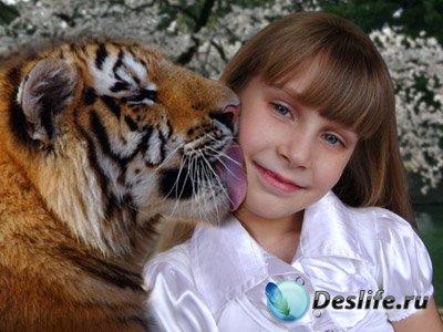 Шаблон рамка для фото – Тигр и …