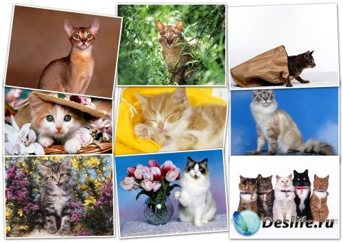 Обои - HQ wallpapers pack 1600x1200 cats