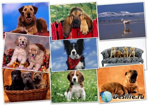 Обои - HQ Wallpapers pack 1600x1200 Dogs
