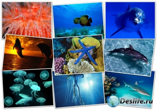 Обои - HQ Wallpapers pack 1600x1200 - Ocean Life