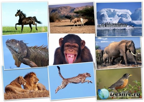 Обои-HQ Wallpapers pack 1600x1200 ANIMALS