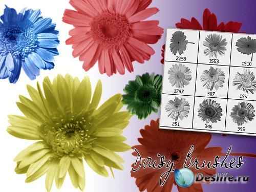 Daisy Photoshop Brushes - Кисти маргаритки