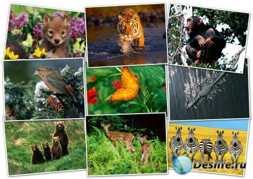 Обои-HQ Wallpapers pack 1600x1200 ANIMALS (1)