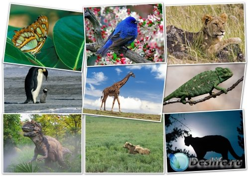 Обои-HQ Wallpapers pack 1600x1200 ANIMALS (2)