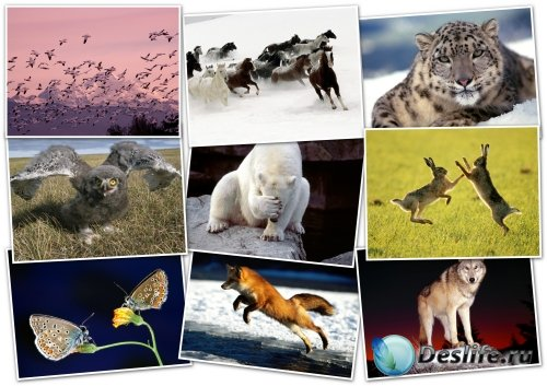 Обои-HQ Wallpapers pack 1600x1200 ANIMALS (3)