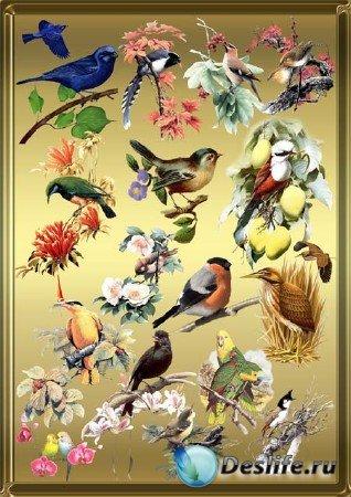 Клипарт - Птички на ветвях