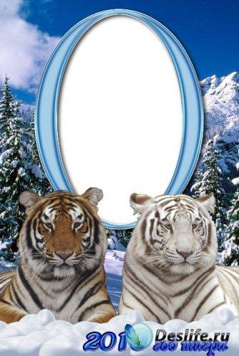 Рамки для фотошопа с тиграми