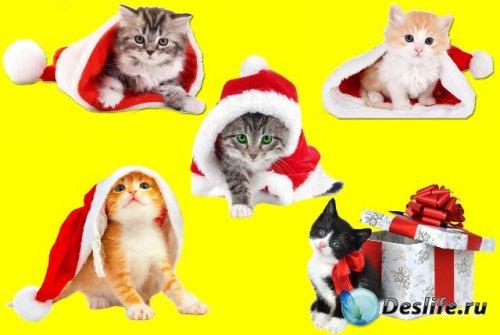 Клипарт - Новогодние котята