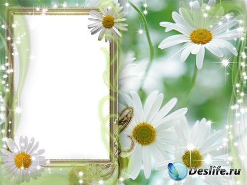 Рамка для фотошопа - Ромашки