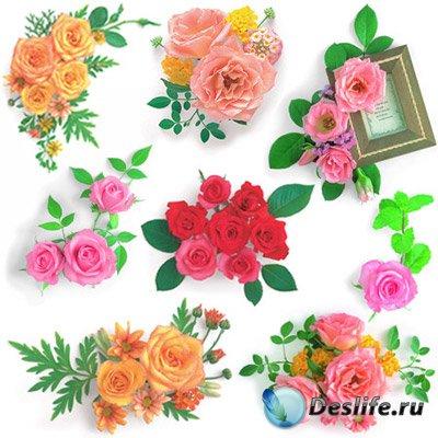 Растровый клипарт - Розы