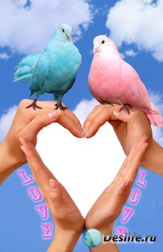 Рамка для фотошопа - Любовь и голуби