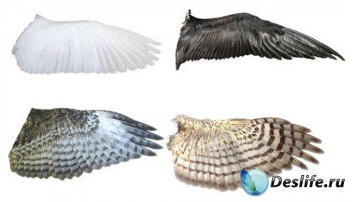 Растровый клипарт - Крылья