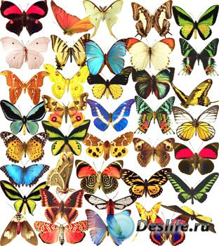 Клипарты - Бабочки