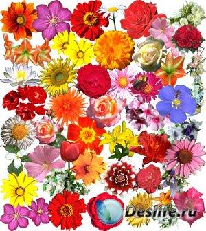 Клипарты - Цветы и букеты
