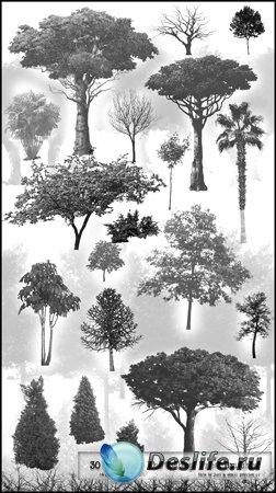 Деревья - Кисти для фотошопа в высоком разрешении