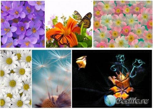 Красивые изображения на тему Цветы