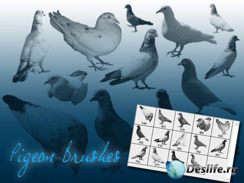 Pigeon Brush - Кисти с голубями