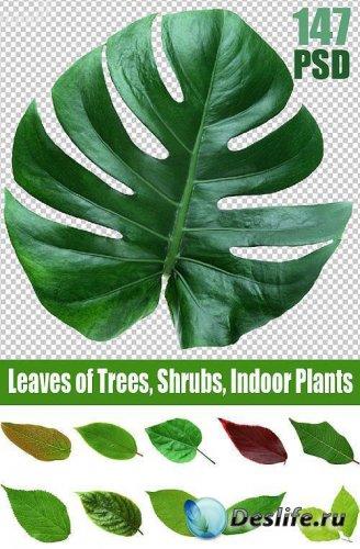 Листья растений - КлипАрт