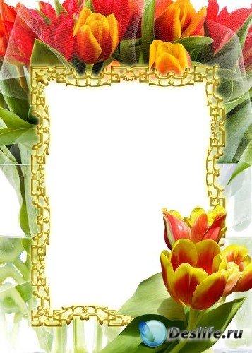 Рамка для фотошоп – Тюльпаны