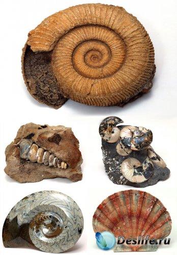 Морские ракушки и камни - КлипАрт