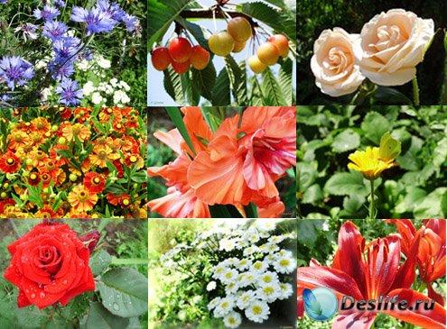 Широкоформатные авторские обои - Цветы, лето