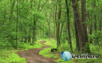 Обои для рабочего стола - Великолепие лесов